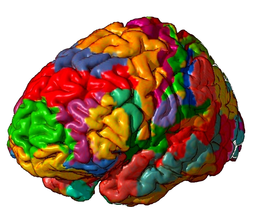 Mapping the brain: scientists define 180 distinct regions, but what ...