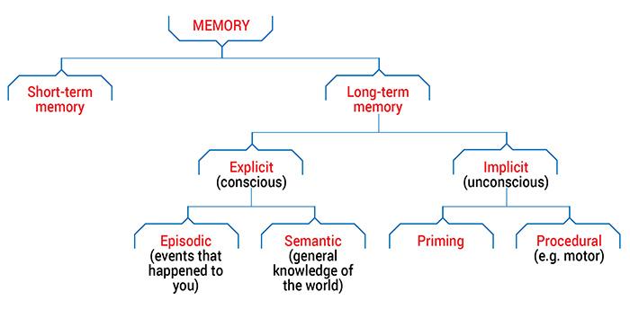 Types Of Memory Queensland Brain Institute University Of Queensland