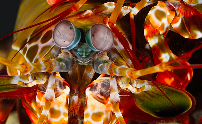 New underwater geolocation technology inspired by marine animals  like mantis shrimp