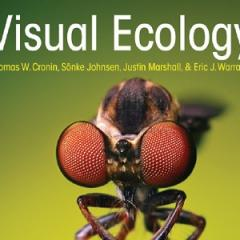 A book on visual science co-authored by a researcher at QBI has picked up an international award and rave reviews.