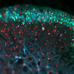 Applications for the advanced neuroscience course are open until 23 December 2016.