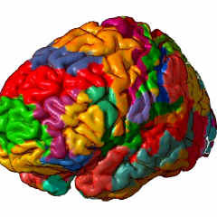 Neuroscientists have developed a modern atlas of the human brain, 97 areas of which have never been described before.