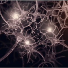 synaptic plasticity in the brain