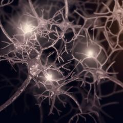 QBI scientists have discovered how tau protein causes neurons to malfunction in the brain.