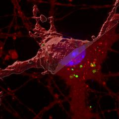 A new 'seeding' process in brain cells could be a cause of dementia and Alzheimer's disease.